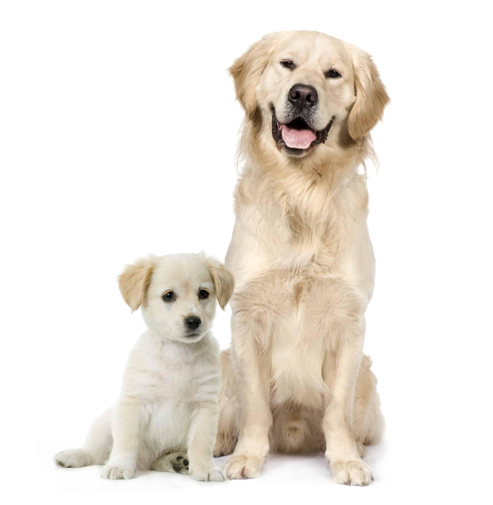 dogs live longer