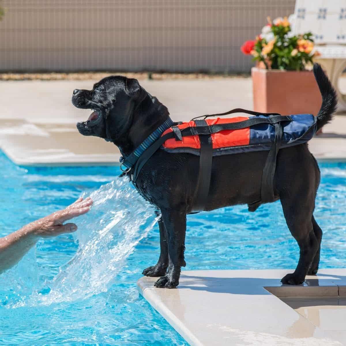 dog needs a life jacket