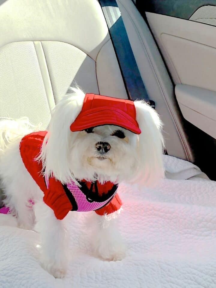 Tips for Keeping your Dog Safe in the Car