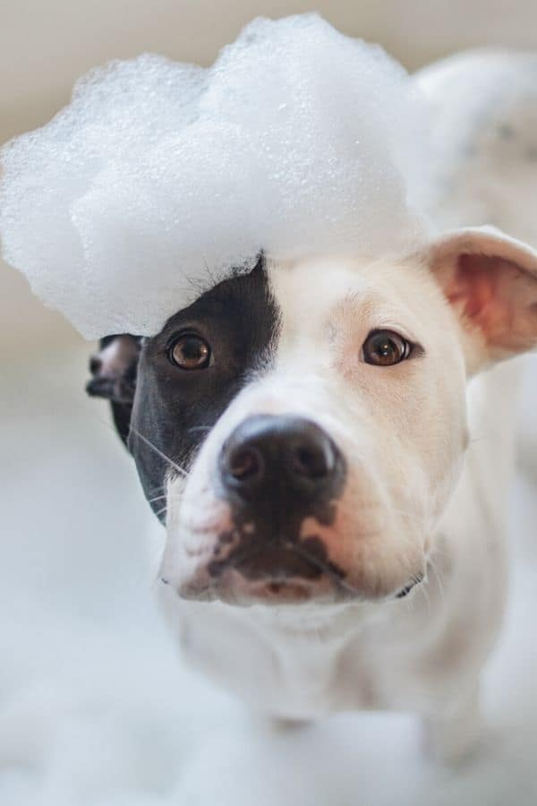 3 Pet Shampoo, Dog Leash and Collar Cleaner Recipes