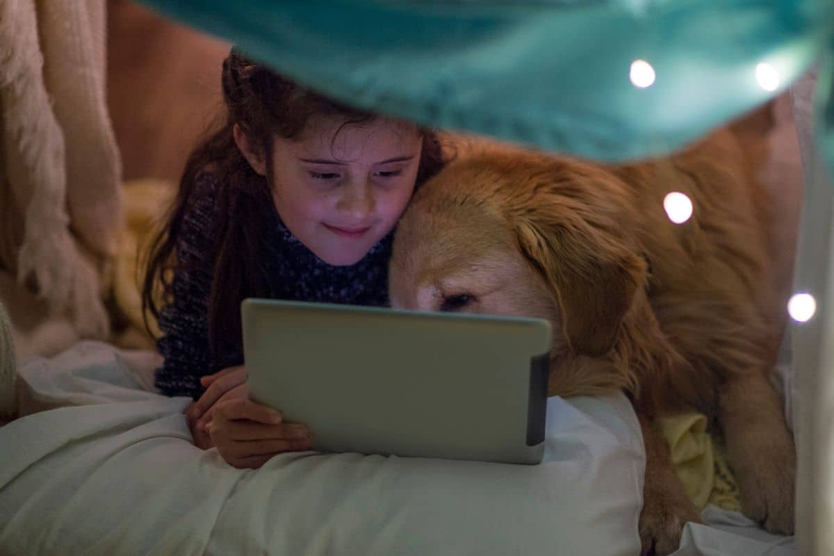 dog watching hallmark movies