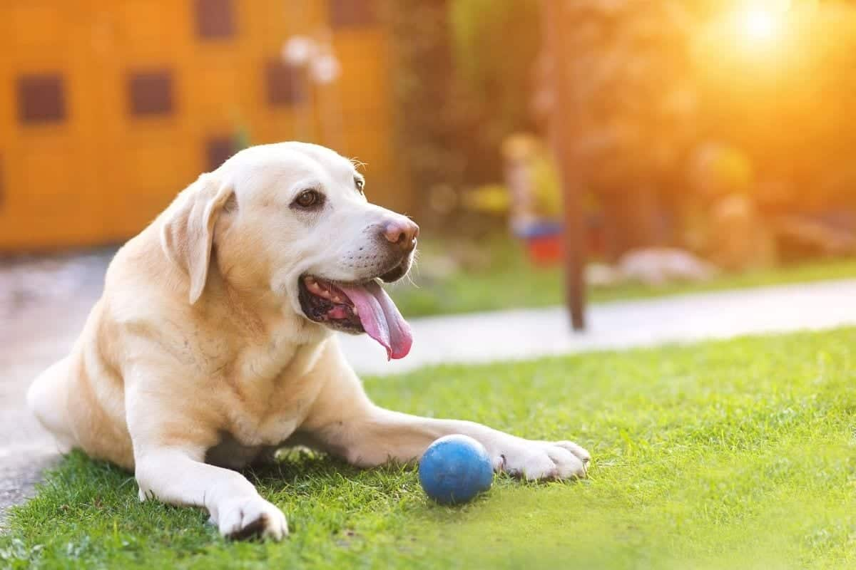 dogs balls