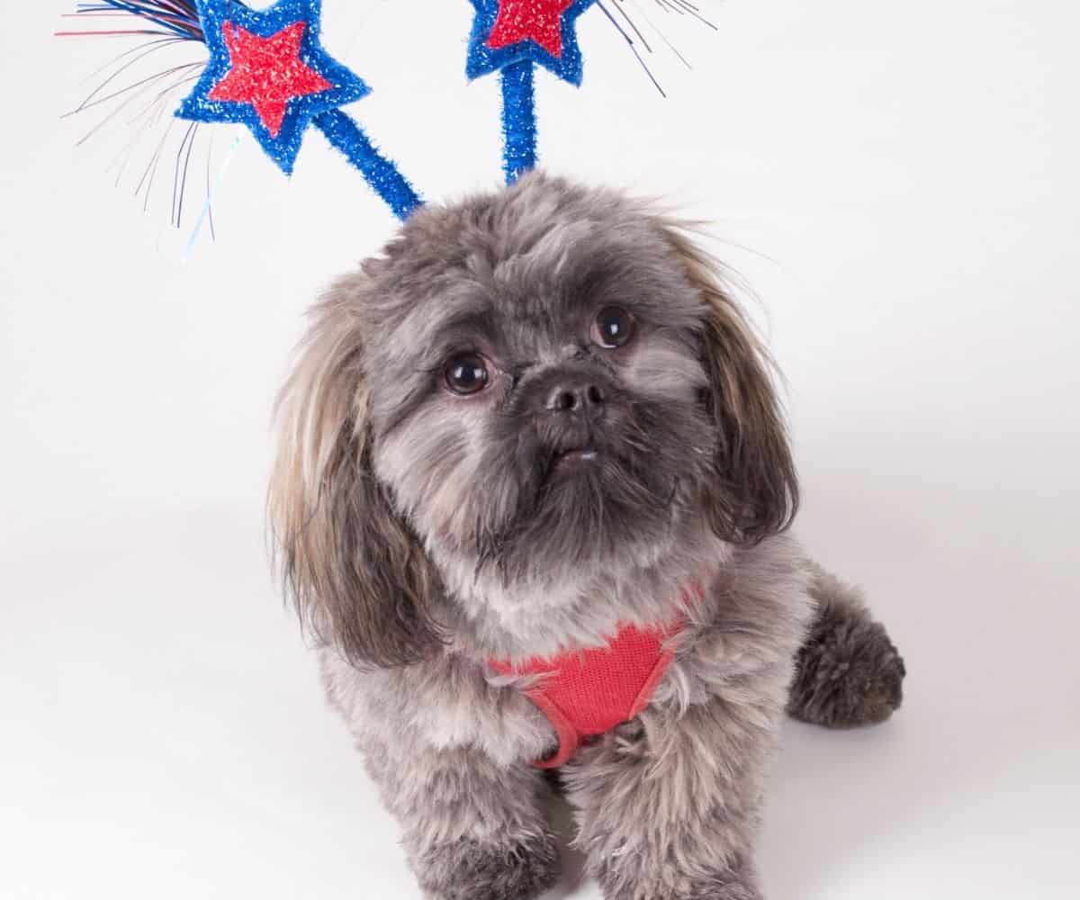 dogs 4th of July