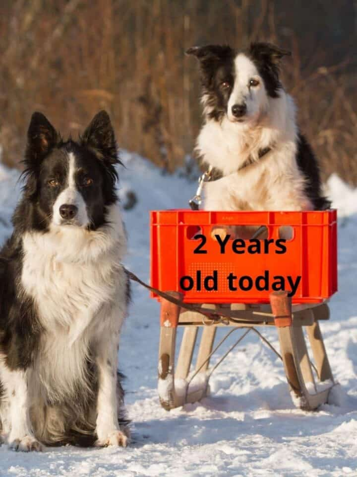 How to Calculate Dogs Age into Human Years