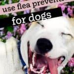 dogs flea prevent