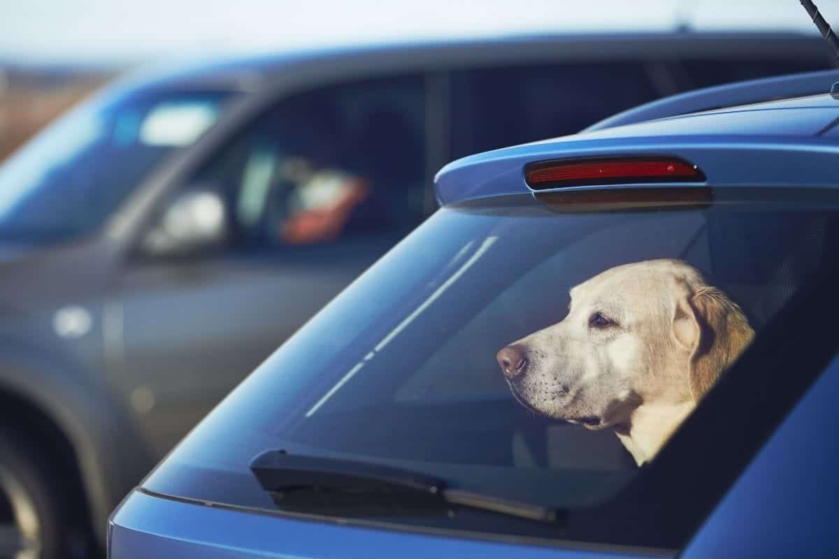 dogs traveling