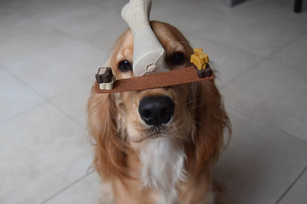 dogs tricks to teach your dog