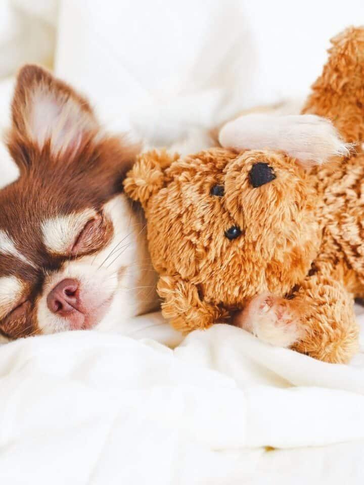 Why Do Dog's Twitch in their Sleep?