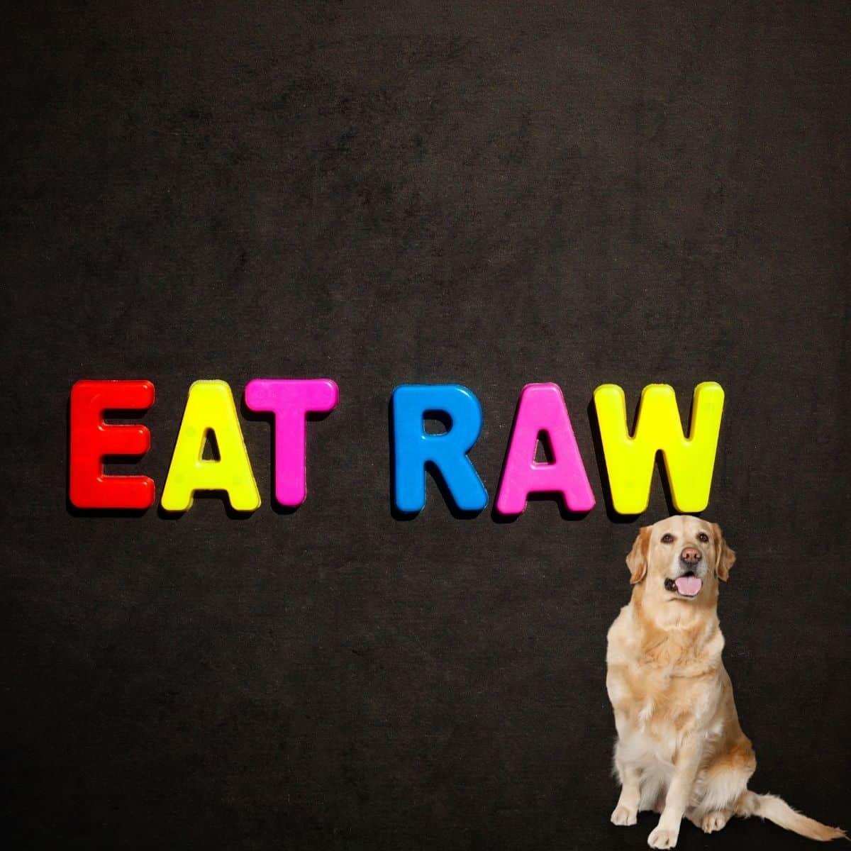 eat raw dog food