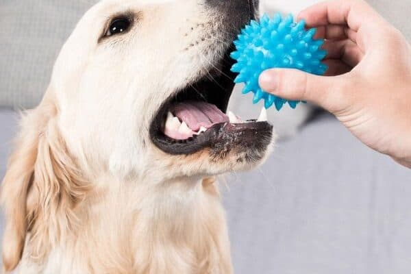 favorite dog toys