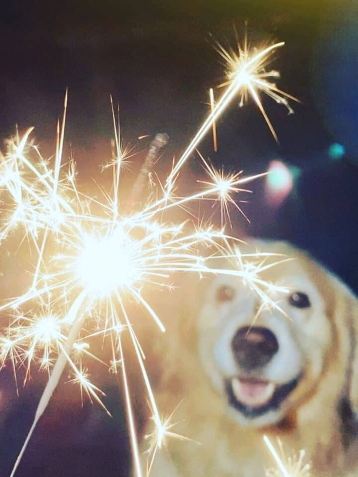Tips for a Stress-free 4th of July for Dogs