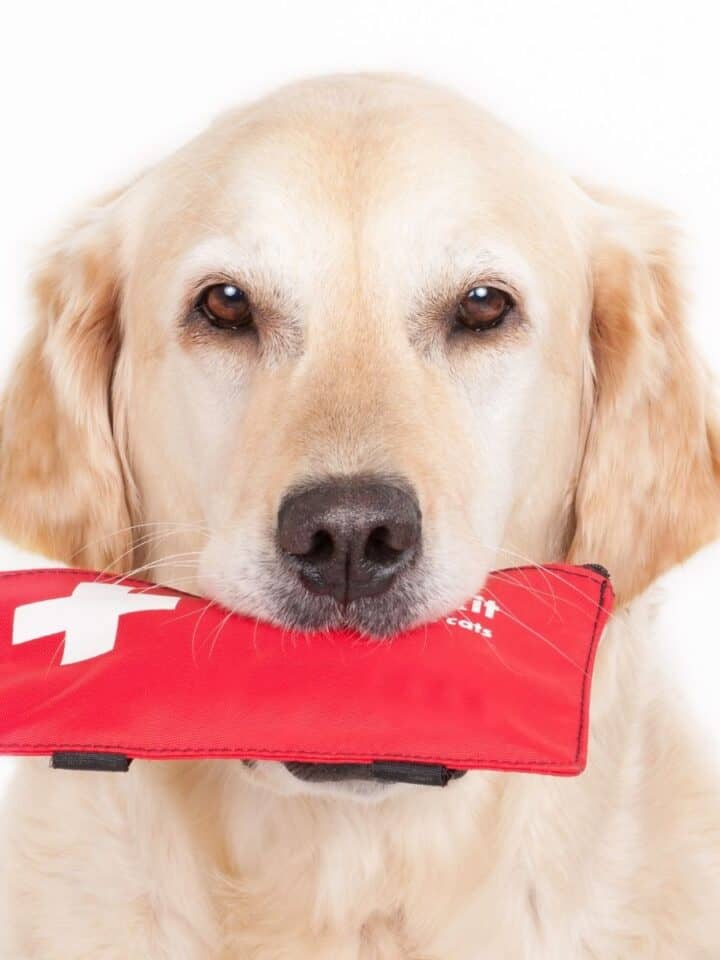 What to Know: Emergency First Aid for Dogs