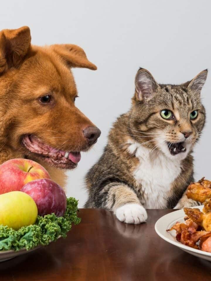 The Ultimate List of Safe Food For Dogs