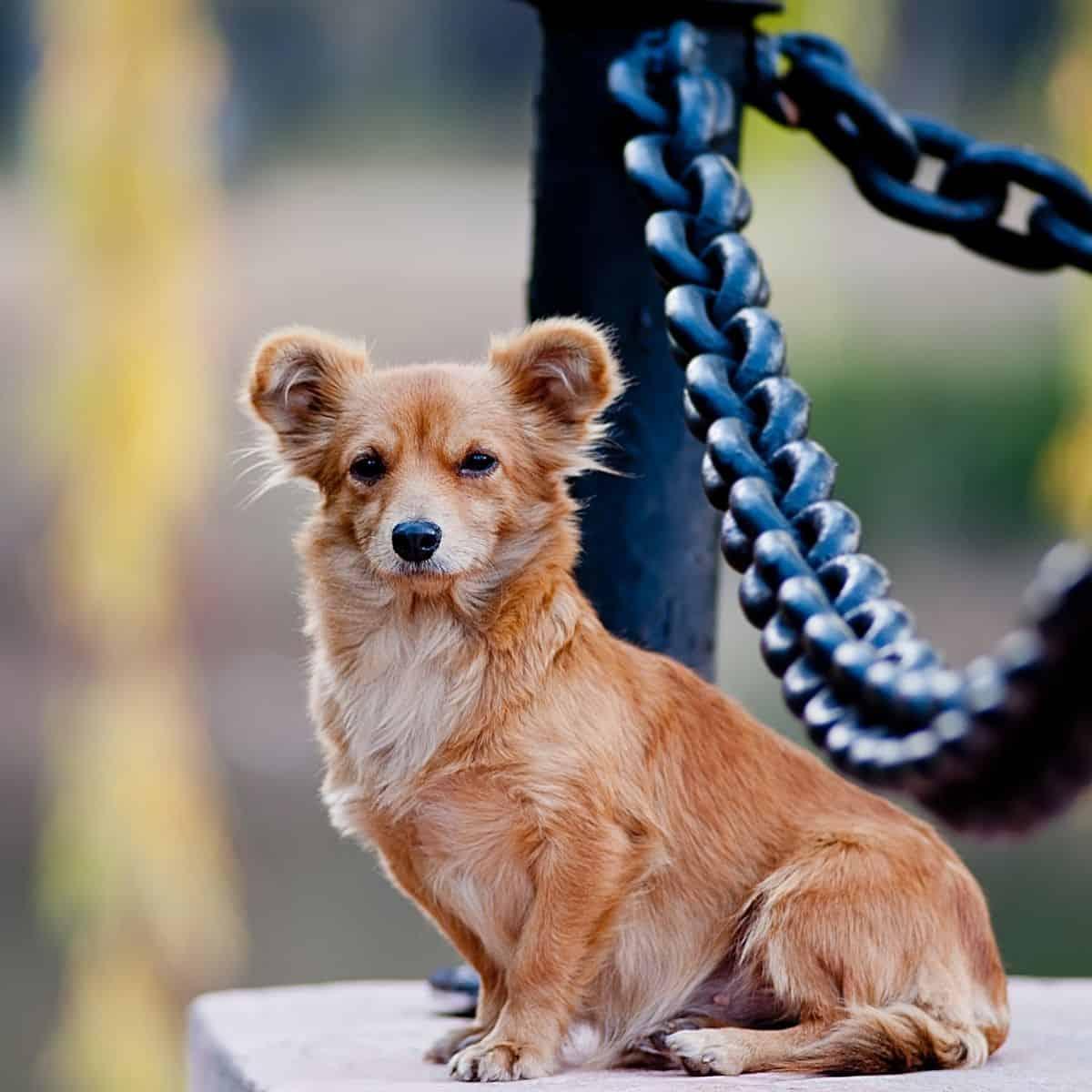 geriatric dogs