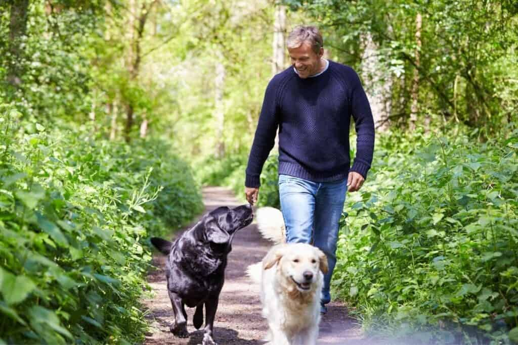 getting fit with dogs