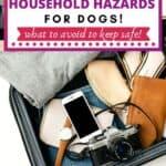 hazardous for dogs pin