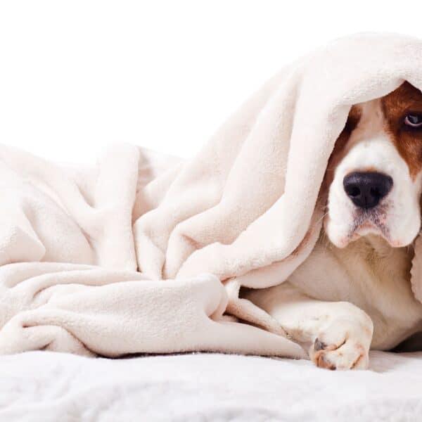 hazardous household for dogs