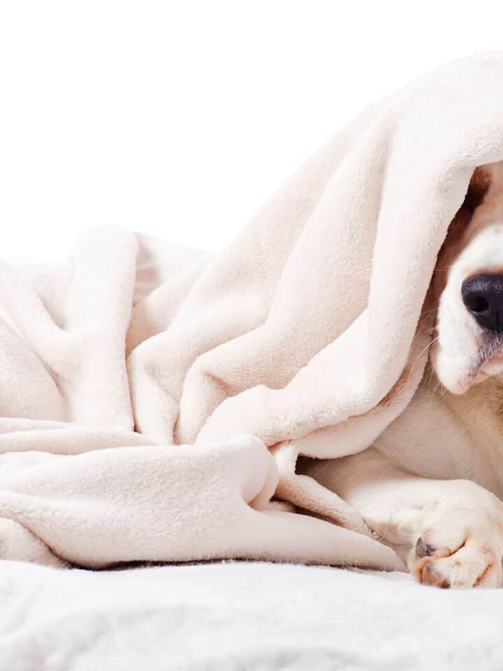 11 Most Dangerous Household Hazards for Dogs