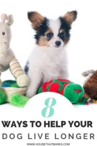 8 ways to help pets live longer