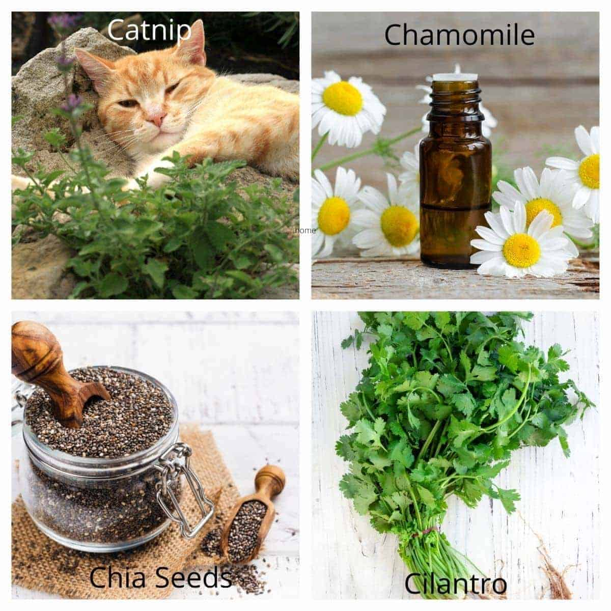 herbs for dogs to eat