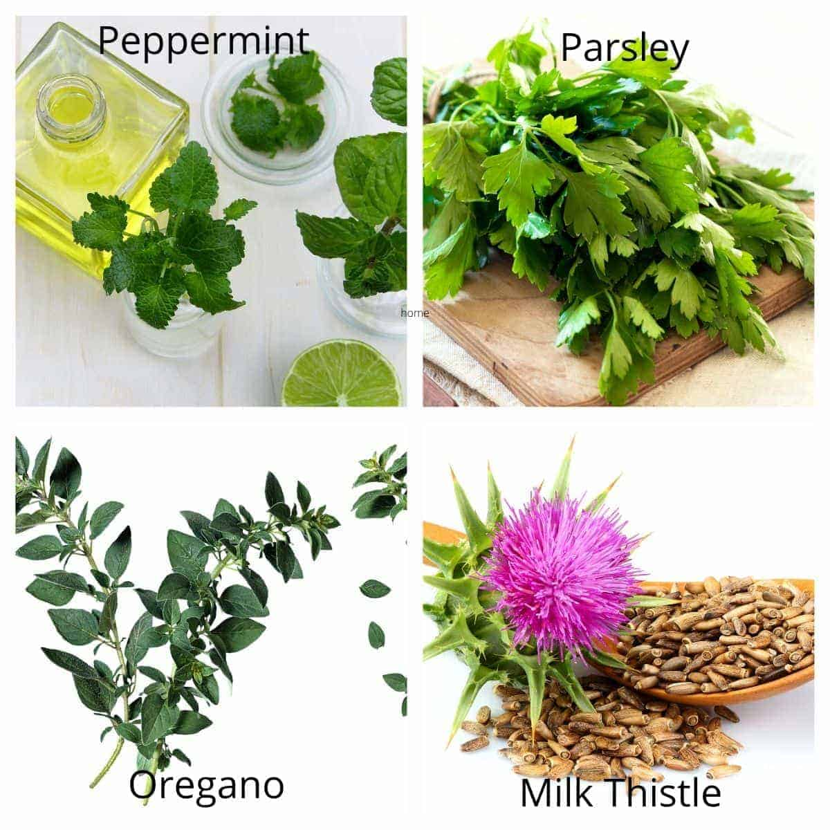 herbs good for dogs