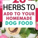 herbs good for homemade dog food