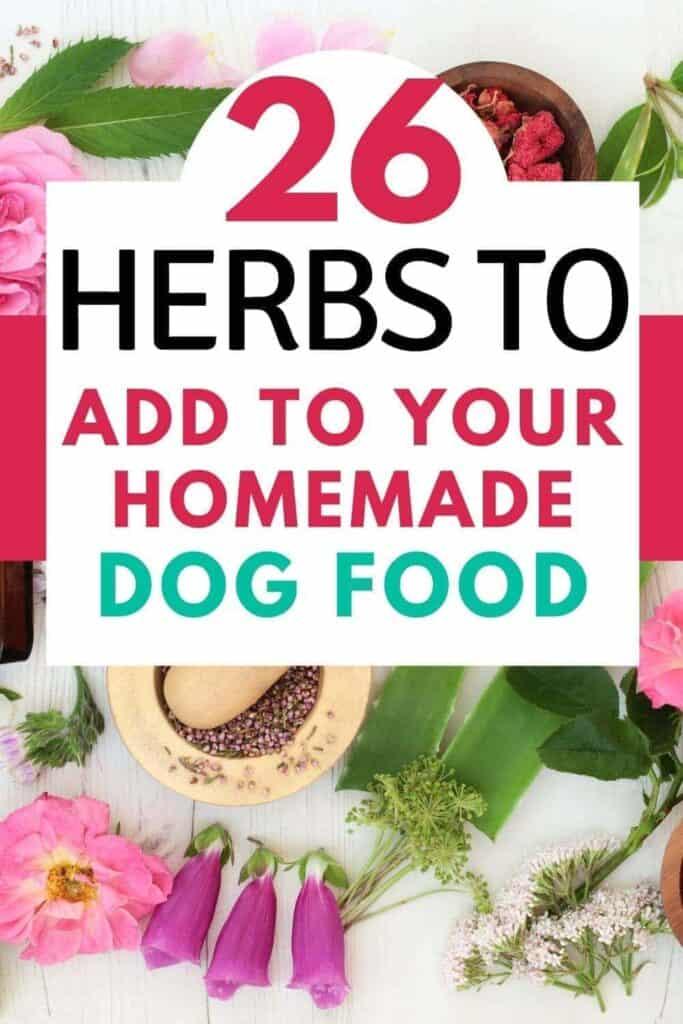 herbs good for homemade dog food