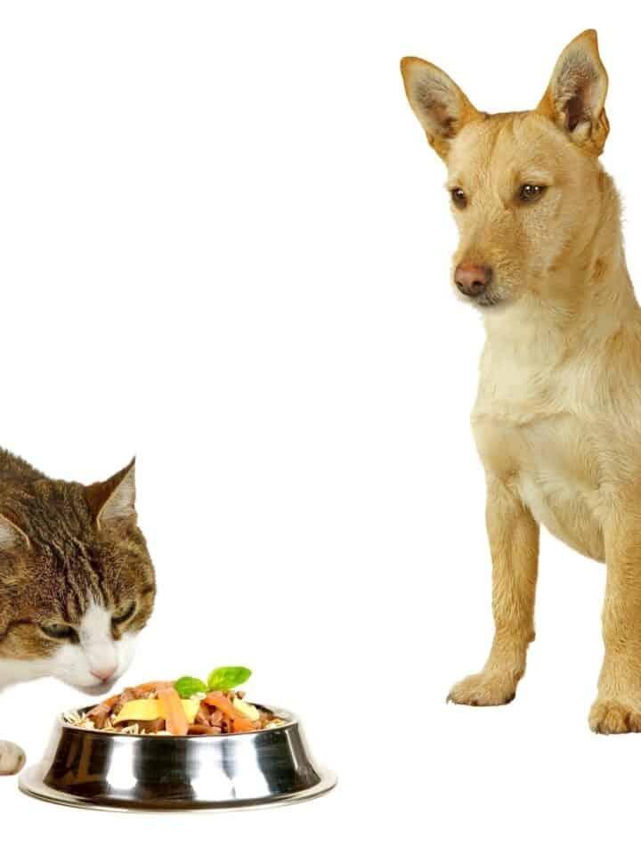 26 Herbs Good for Homemade Dog Food
