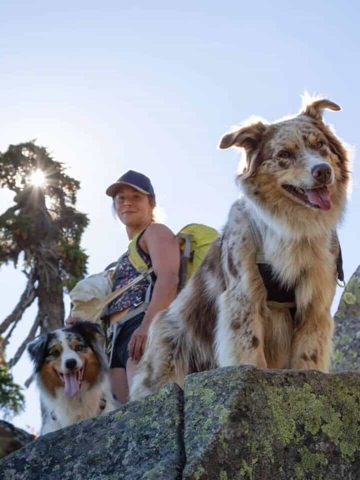 5 Essential Tips for Hiking or Backpacking with your Dog