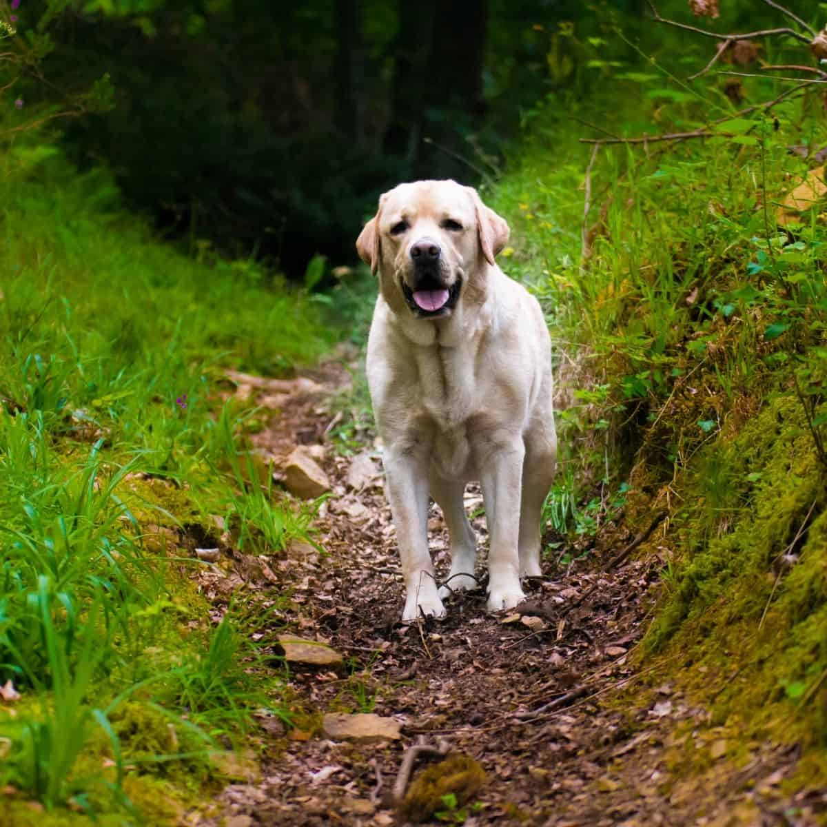 hiking etiquette with dogs