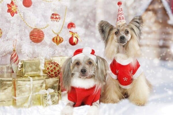 Holiday DIY for Dogs