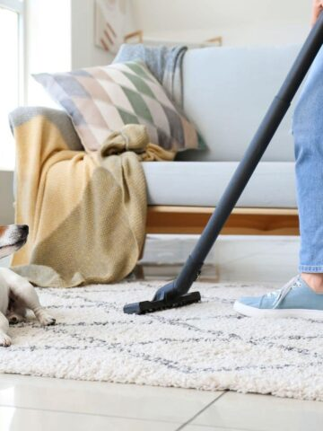 23 Best House Cleaning Tips for a Shedding Dog