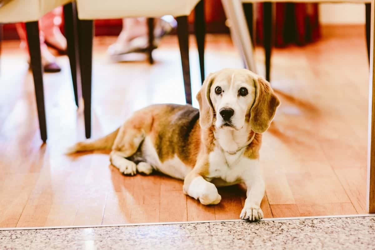 household hazards for dogs