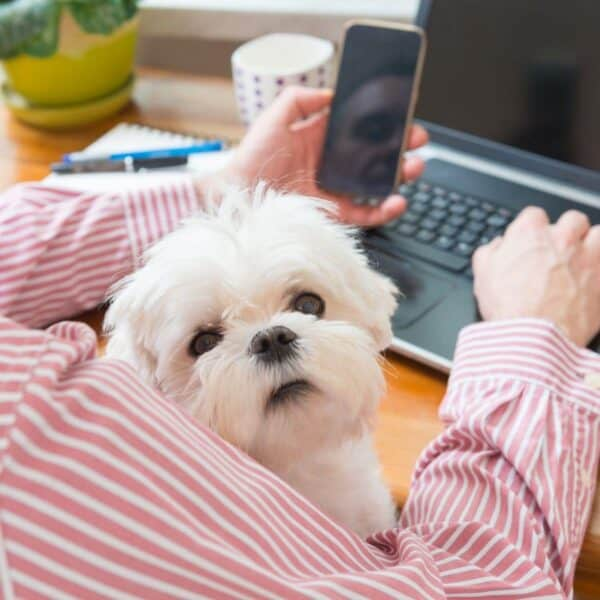 making money working with dogs