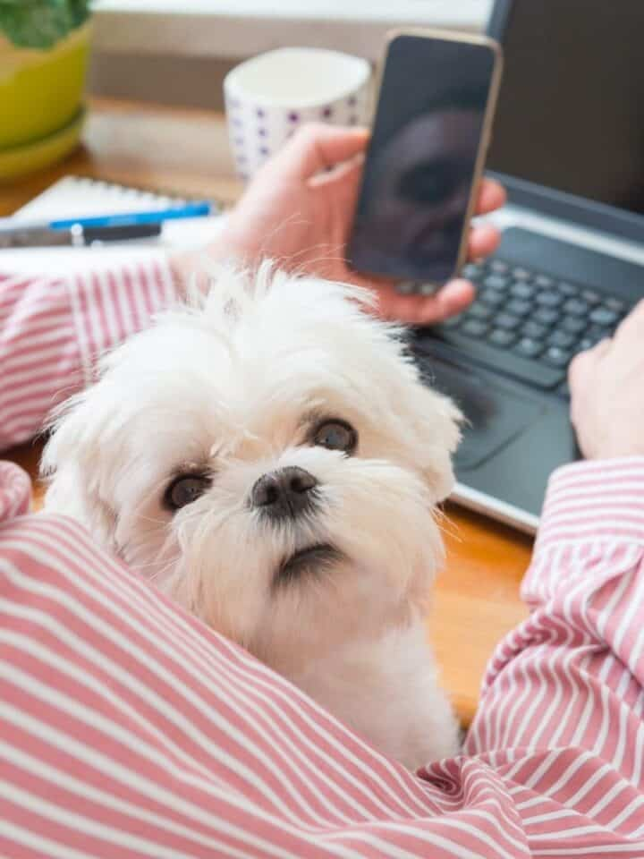 17 Ways to Make Money Working With Dogs