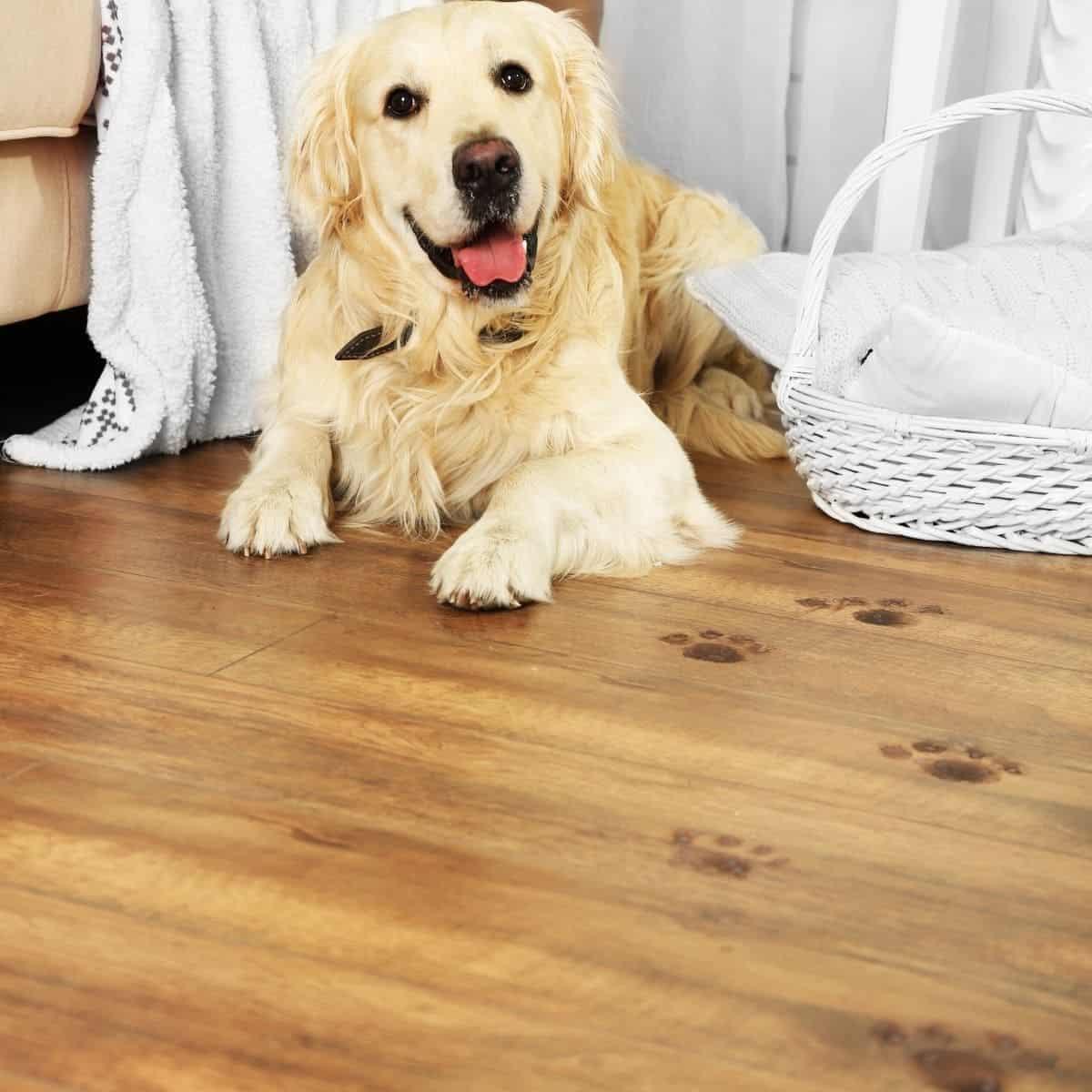 muddy paws dogs