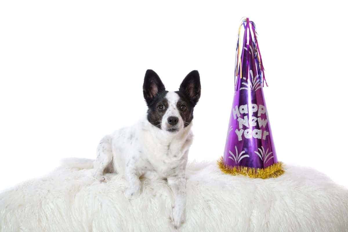 new years for dogs
