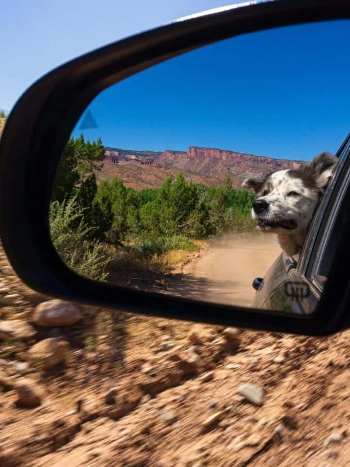 7 Tips for Off-Roading with your Dogs
