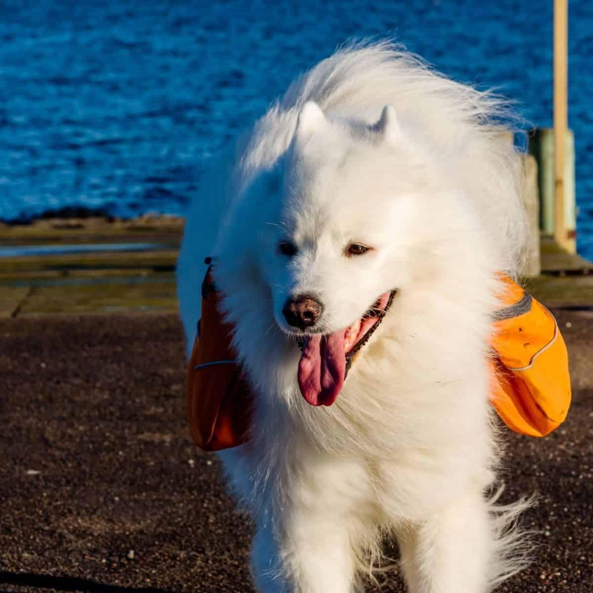 protecting dogs earthquake