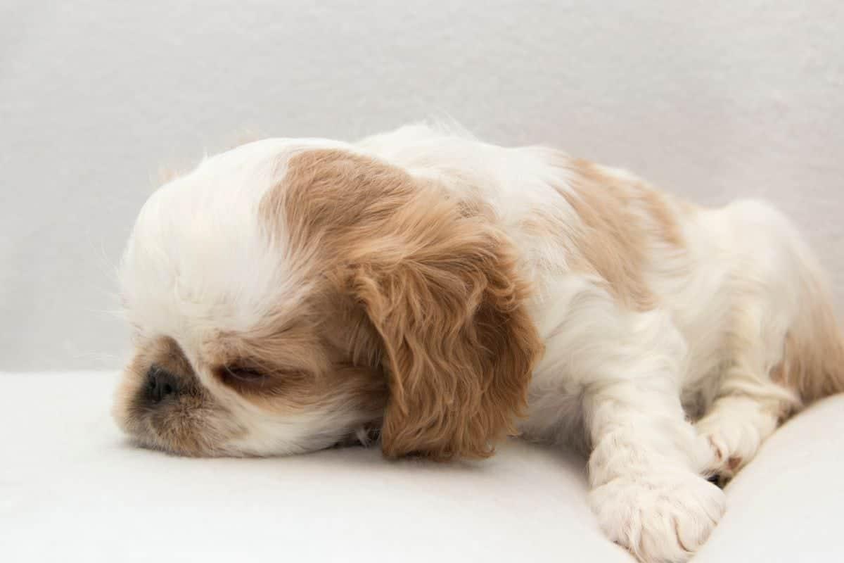 sleeping puppy at night