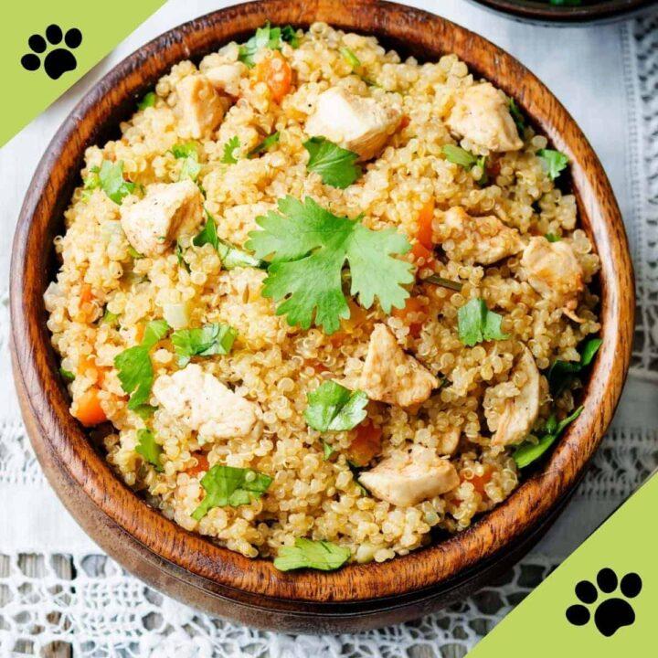 quinoa chicken dog food