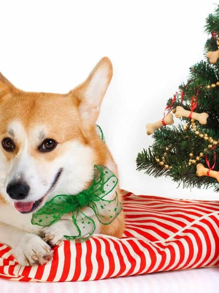7 Best Stocking Stuffers for Dogs