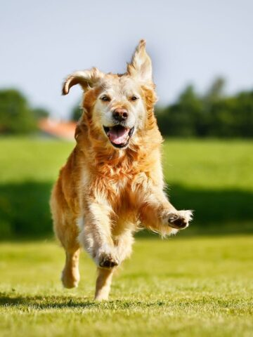 Summer BBQ Safety Tips for Dogs