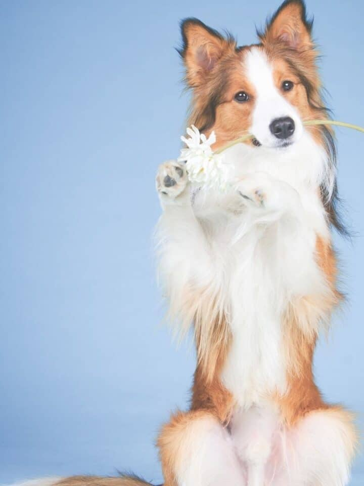 10 Easy Commands to Teach Your Puppy