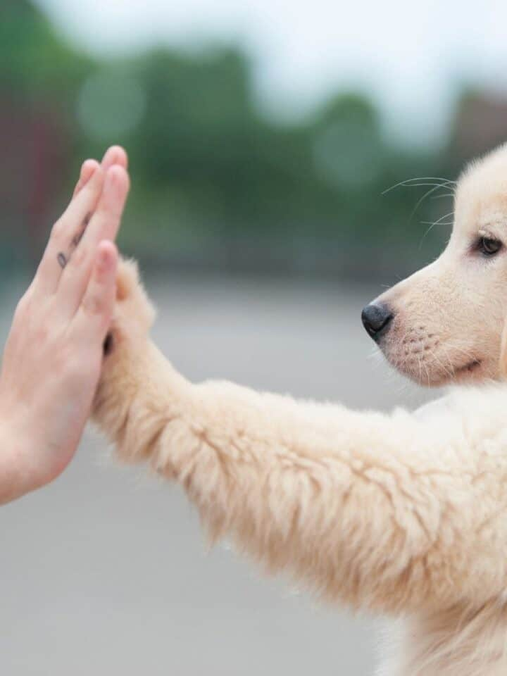 5 Ways to Train Your Dog to Come, Sit, Stay