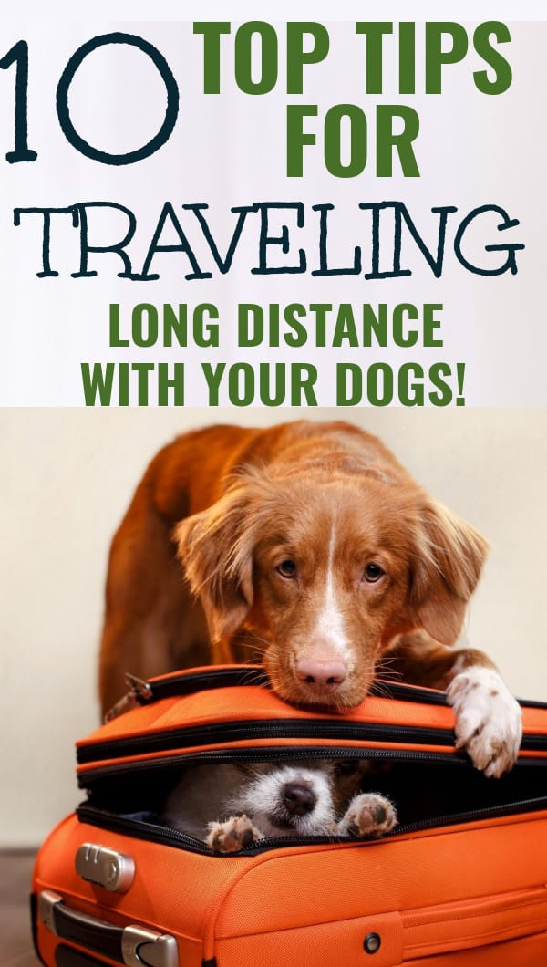 Top 10 Tips for Traveling Long Distance with Dogs
