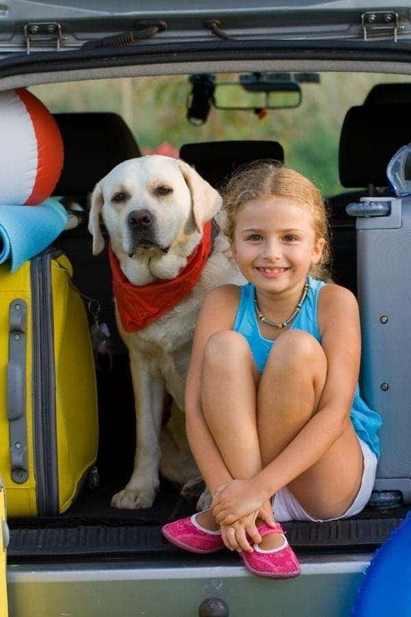 7 Popular Tips for Traveling with Dogs