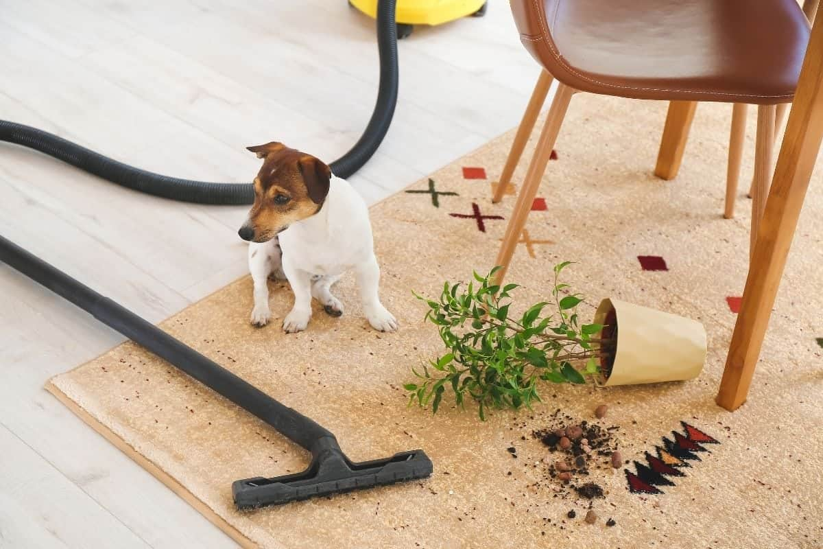 vacuum for dogs