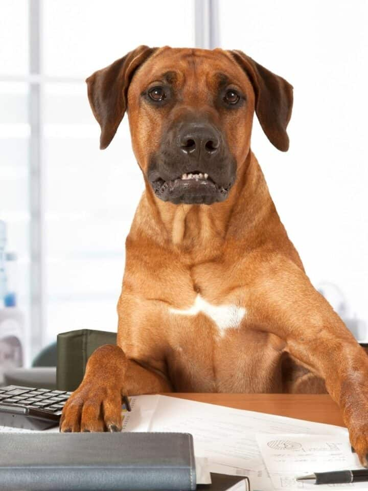 How To Work From Home With A Dog